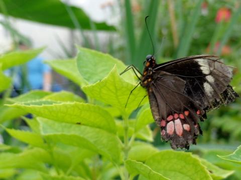 Malgosia Kobylinski Butterfly garden, 2013